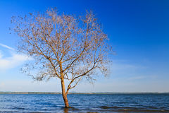 Tree in lake. With the beautyfull sky Stock Images