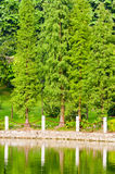 Tree  and  lake Stock Photos