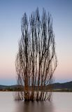 Tree in lake. A single tree in a lake after sunset Stock Photos