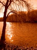 Tree by the lake. Beautiful tree by the lake (orange toned Royalty Free Stock Photography