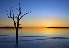 Tree and Lake stock photo