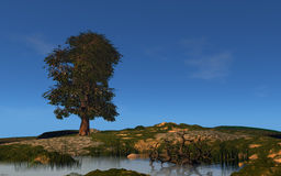 Tree and lake. Summer landscape with tree and lake 3d rendered Royalty Free Stock Image