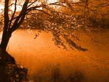 Tree by the lake. Beautiful tree by the lake (orange toned Stock Image