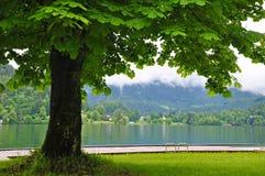 Tree at lake Bled after raining Royalty Free Stock Photo
