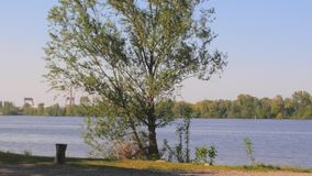 Tree by a lake with a boy on a bicycle. Tree moved by the wind by the lake, with a boy who rides a bike on a spring day stock video footage