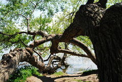 Tree in Lake Chiemsee Stock Image