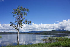 Tree in lake with cloud reflections. Eucalyptus tree in water against blue sky with clouds Royalty Free Stock Image