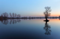 Tree in lake with color sky Stock Image