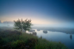 Tree by lake in dense fog Royalty Free Stock Photos