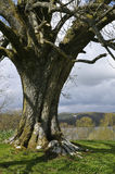 Tree in Lake District, UK Royalty Free Stock Images