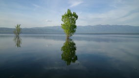 Tree in the lake. Dojran stock footage