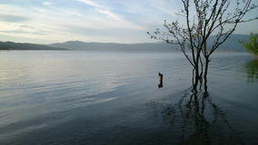 Tree in the lake. Dojran stock video