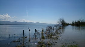 Tree in the lake. Dojran stock video footage