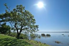 Tree and lake Stock Image