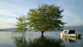 Tree in the lake. Fishing boat and tree in the lake stock video footage