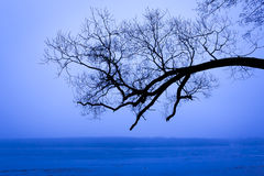 Tree and lake in fog. Stock Photo