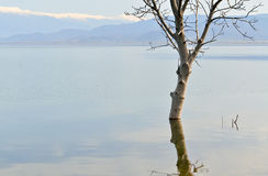 Tree in the lake Stock Photos