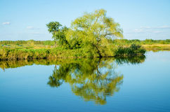 Tree on Lake. Inverted reflection in water Stock Image