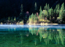 tree and lake in jiuzhaigou Royalty Free Stock Image