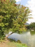 The tree by the lake Royalty Free Stock Photography