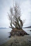 Tree by the lake. Lago Maggiore, Baveno Italy Stock Photos