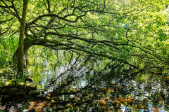 Tree by the lake Stock Photography