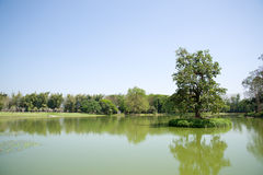 Tree on the Lake at Mae Fah Luang Art & Cultural Park Royalty Free Stock Photography