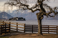 Tree on Lake Maggiore royalty free stock photos