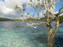 Tree Lake Mckenzie Fraser Island Queensland Australia Stock Photo