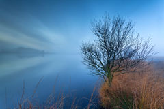 Tree by lake on misty morning Stock Images