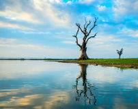 Tree on a lake in Myanmar Stock Images