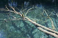 Tree in a lake from Plitvice Stock Photography