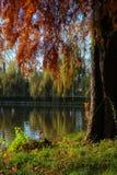 Tree at the lake shore royalty free stock images