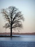 Tree by the lake. At sunset Stock Photo