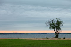 Tree by the lake at sunset. Sunset in the lake. Royalty Free Stock Photos