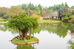 Tree on the lake. In Thailand stock photography