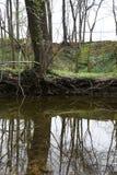 Tree lake upside down royalty free stock photography