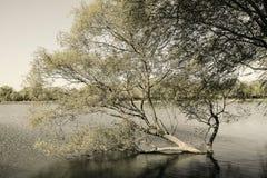 Tree at the lakeside Royalty Free Stock Photos