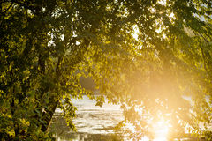 A tree on a lakeside at sunset. Shot in Vienna, Austria, Lush view of park Stock Photo