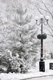 Tree and lamppost. Photo was taken during the winter on the Donetsk street in February 2014, Ukraine Stock Photo