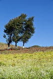 Tree and land in sunny Royalty Free Stock Image