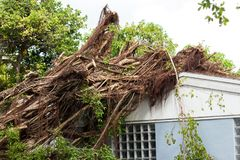 Tree landed on the roof. View of huge tree landed on top of a house due to Hurricane Irma winds in South Florida, causing damage to the structure Royalty Free Stock Photos
