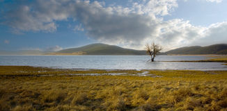 Tree landscape. Landscape with tree and lake; bulgarian nature Royalty Free Stock Image