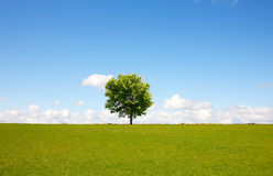 Tree landscape Royalty Free Stock Photography