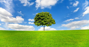 Tree landscape Stock Image
