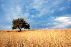 Tree in landscape Royalty Free Stock Photography