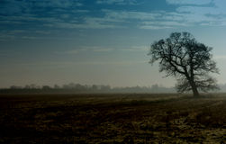 Tree in landscape. Cotwolds landscape Royalty Free Stock Images