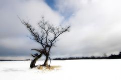 Tree in landscape. A bare tree in melting snow royalty free stock image