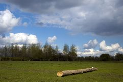 Tree in landscape. Cut off tree on field, clouded sky Royalty Free Stock Photos