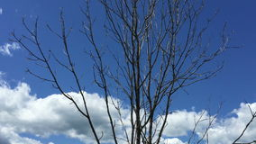 Tree landscape, blue sky with clouds. The  Tree landscape, blue sky with clouds stock video